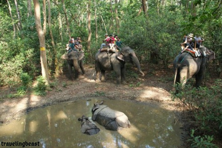 Chitwan National Park, Visit In Nepal, zoo,Elephants, Rhino, mountains, Travelingbeast