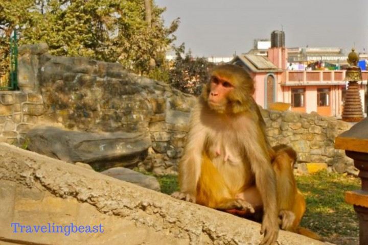 Swayambhu Temple and Meet the Monkeys, Travelingbeast, kathmandu Nepal