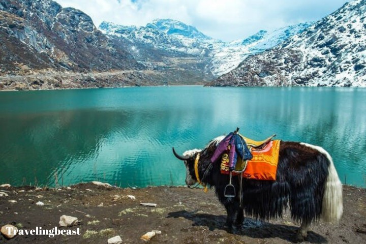 Yak Safari To Pristine Tsomgo Lake, Gangtok